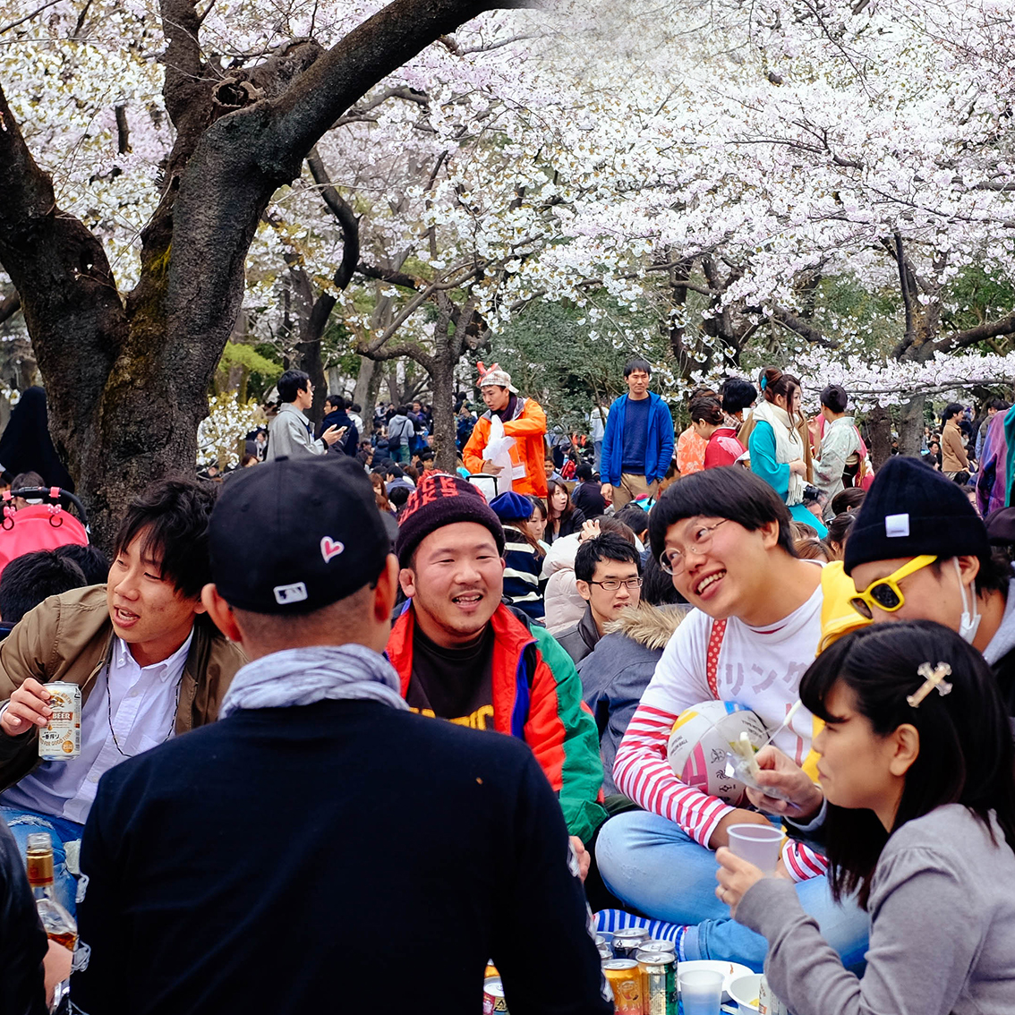 Cutest Hanami Dude Ever!