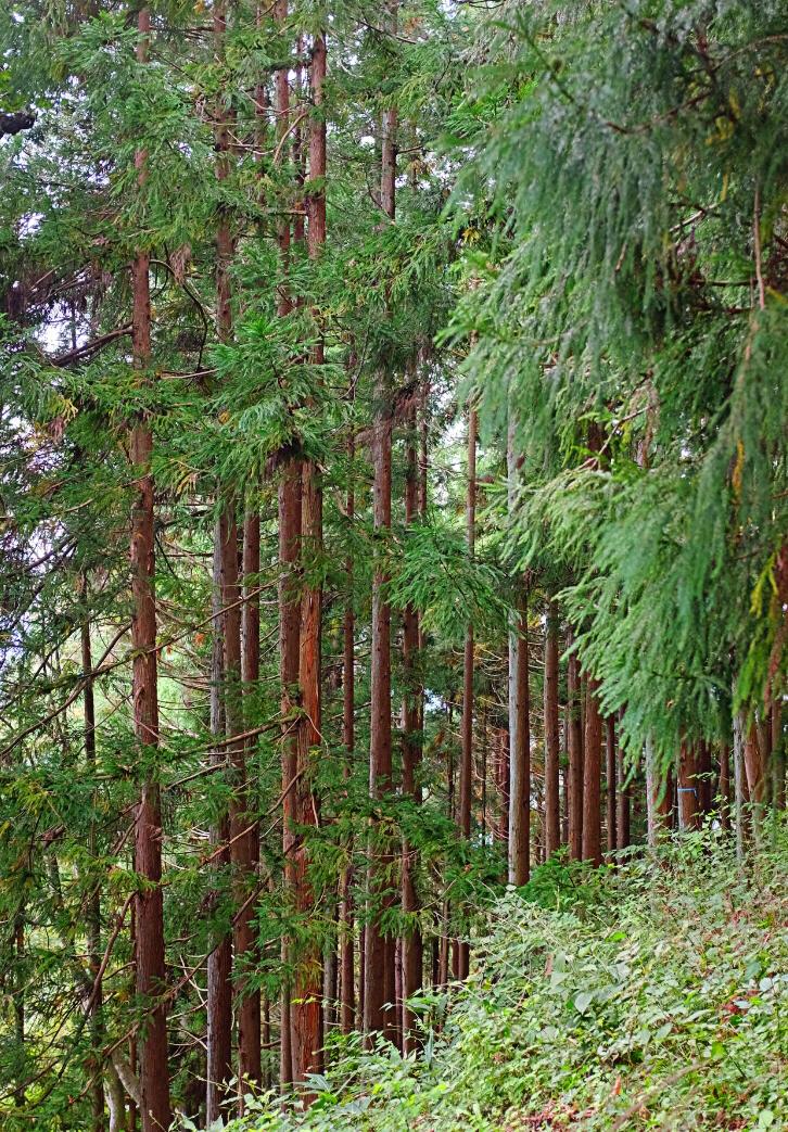 Around Nagano View