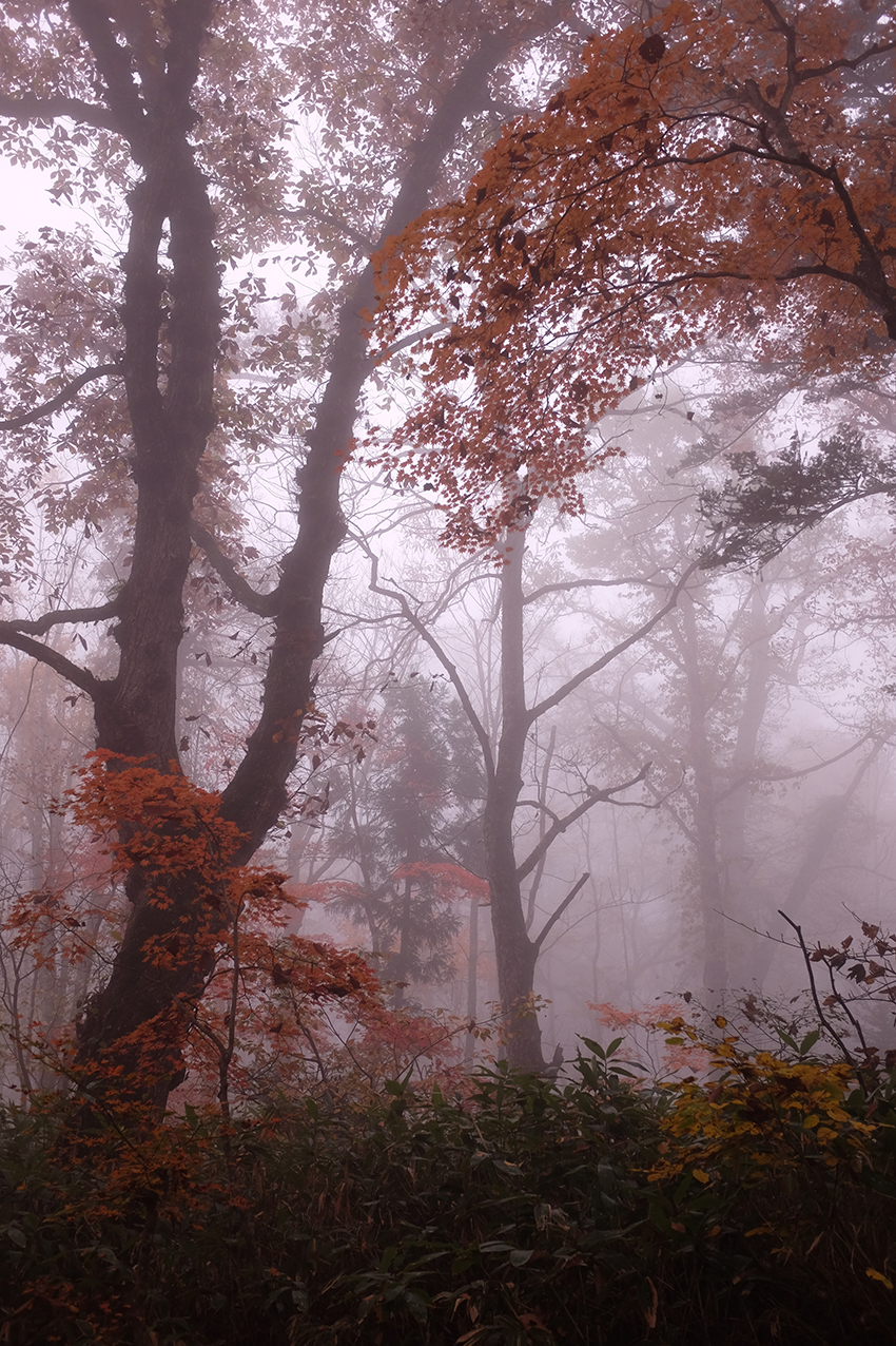 Autumn Leaves in Misty Forest Hello Sandwich