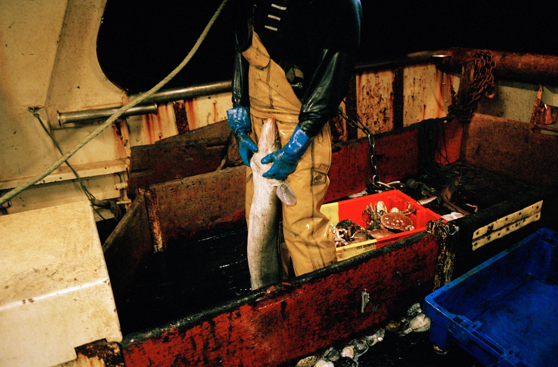 Tri du poisson.   Les quotas de pêche sont fixés par l'Union Européenne et déterminés dans le cadre de la Politique Commune de Pêche (PCP) afin de protéger les ressources halieutiques et de permettre le renouvellement des stocks de poissons. Tous les poissons comestibles pêchés par les chalutiers européens sont soumis à cette règlementation. Tant qu'ils pêchent en Europe. Certains lobbies, présents au Parlement EU, font pression pour continuer de pratiquer la pêche en liberté.