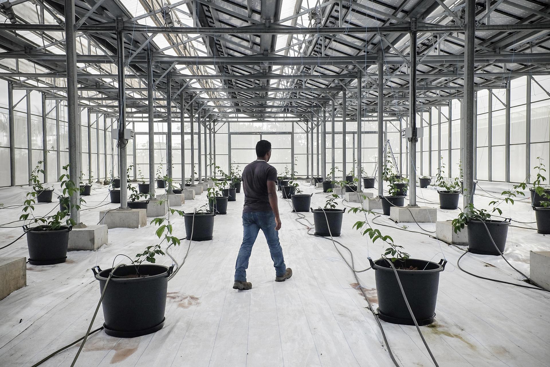 Visite avec Mr Tailamé (encadrant des détenus) des serre de Bardzour, la nouvelle centrale solaire d'Akuo Energy, a été construite à côté du centre de détention du Port (500 prisonniers hommes). Elle associe production d'électricité avec batteries de stockage (consommation de 12 000 foyers, 8 000 tonnes de CO2 évités par an), production agricole sous serre et réinsertion des détenus. Juillet 2015, Le Port, Ile de la Réunion.