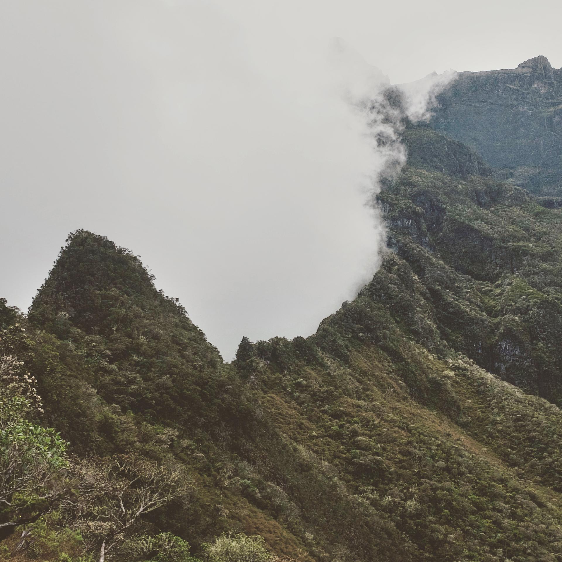MFache_OctNov2016_InstKreol_Ile de La Reunion_0084.jpg