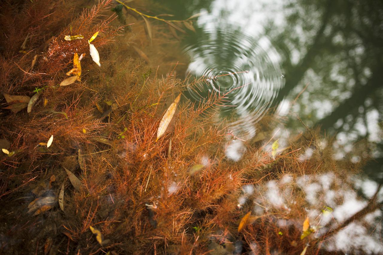 08_©Nicolas_Leblanc_08.09.14_Meuse-sauvage_Régneville-sur-Meuse_IMG_8180.jpg