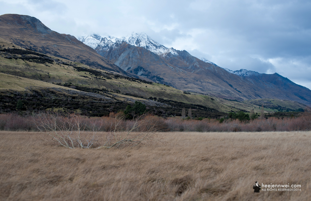 The Glenorchy Swamp trail, the rule of third.