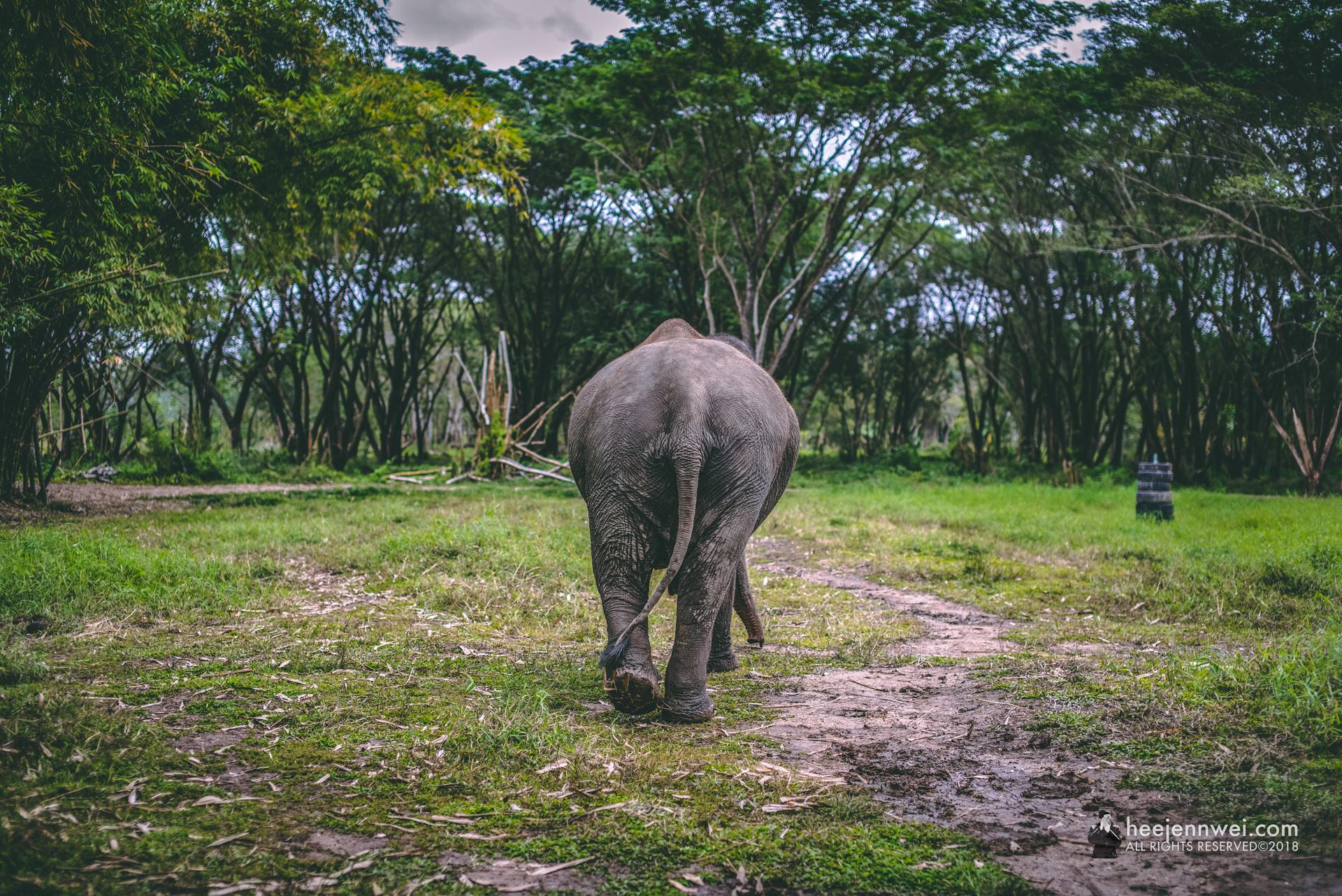 Good bye elephant valley!