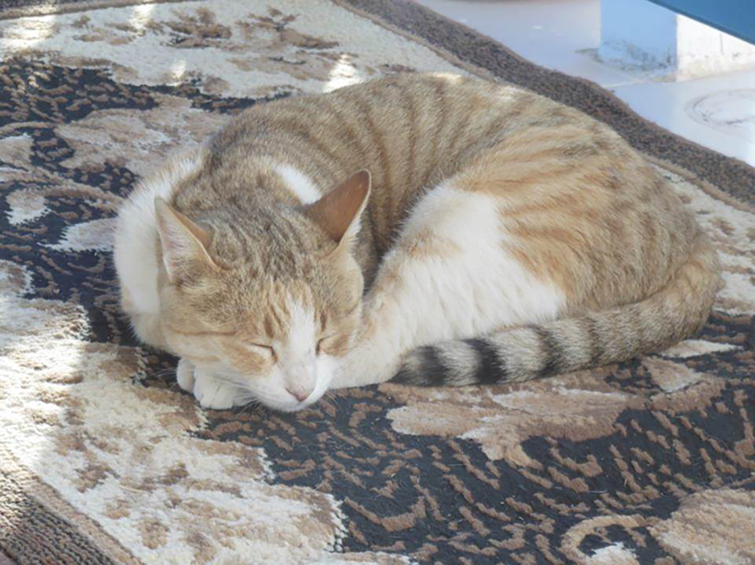 Figure 26: A very content Abydos dig house cat.