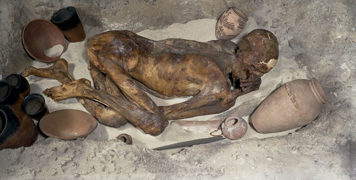Figure 3: This Predynastic mummy of a man is in the British Museum. He lived circa 3400 BCE. The exhibit is a reconstruction of a Predynastic burial, including tomb goods typical of this time period. Image courtesy of The British Museum, accession number EA32751.