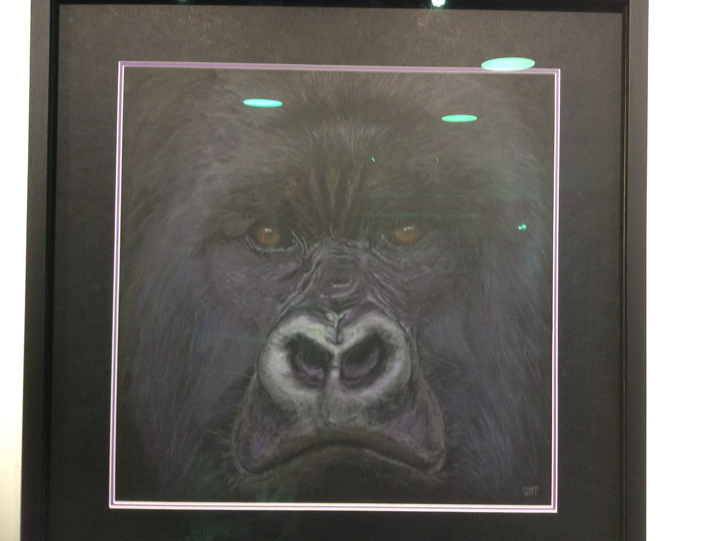 Mountain Gorilla, (Gorilla beringei) , pan pastel and coloured pencil