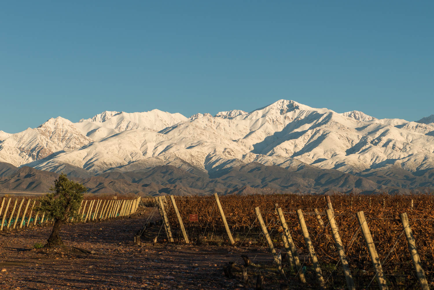 Planting in a cross section of soil during the winter. Vina Andrico vineyard in Mendoza, Argentina.
