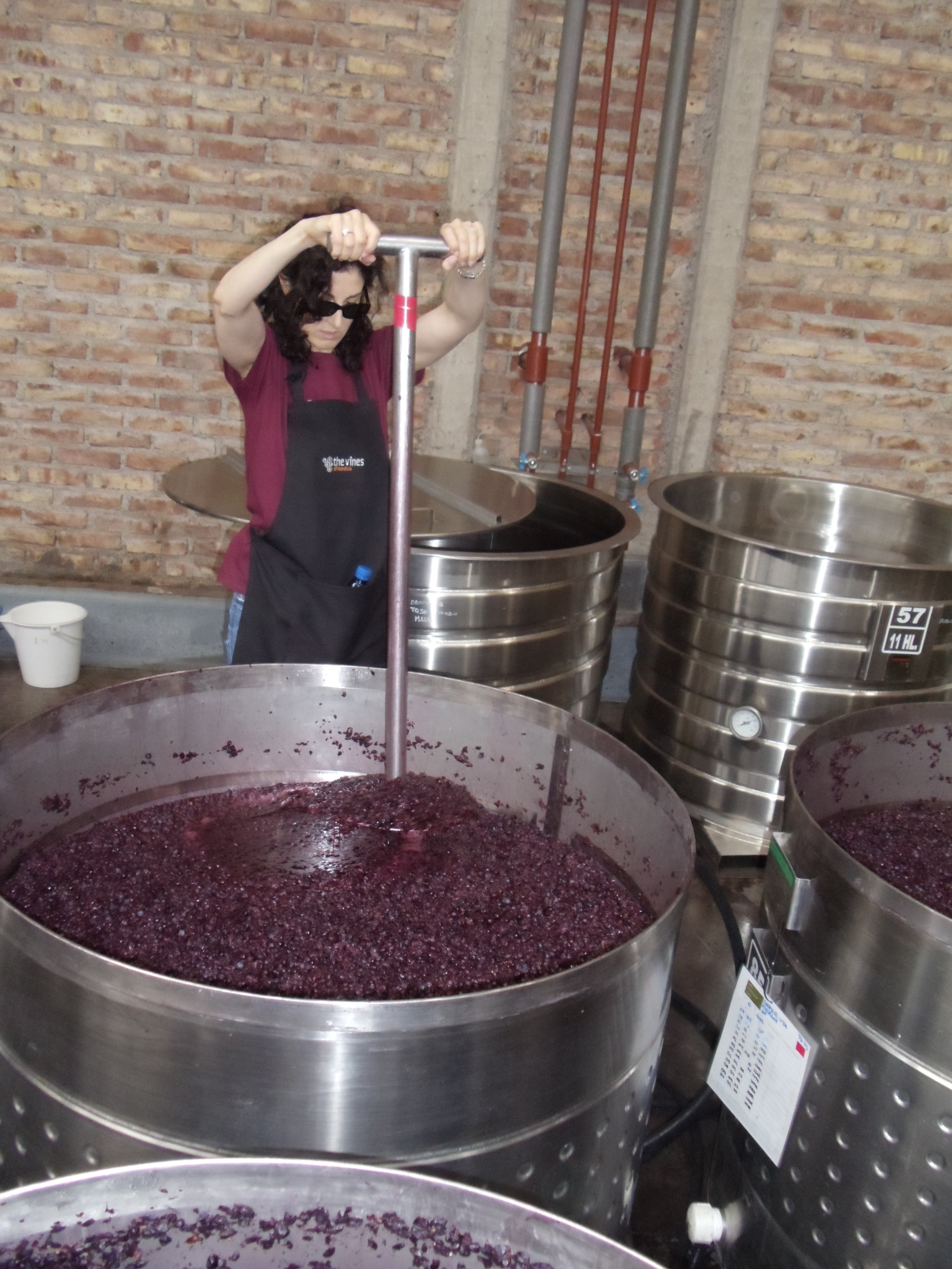 Working with the grapes during the post-fermentation process. Vina Andrico vineyard in Mendoza, Argentina. we