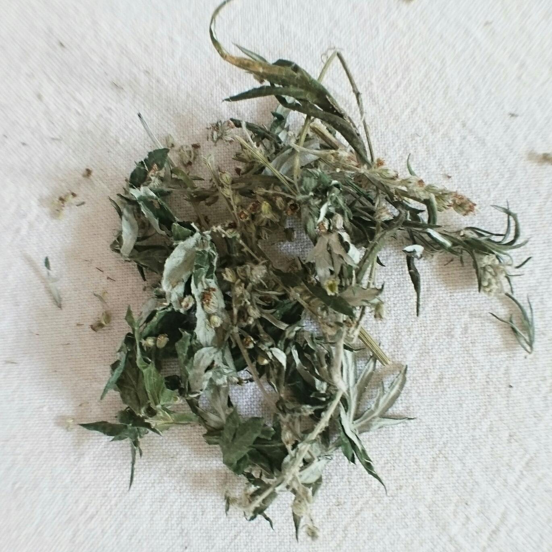 Mugwort (Artemisia vulgaris)