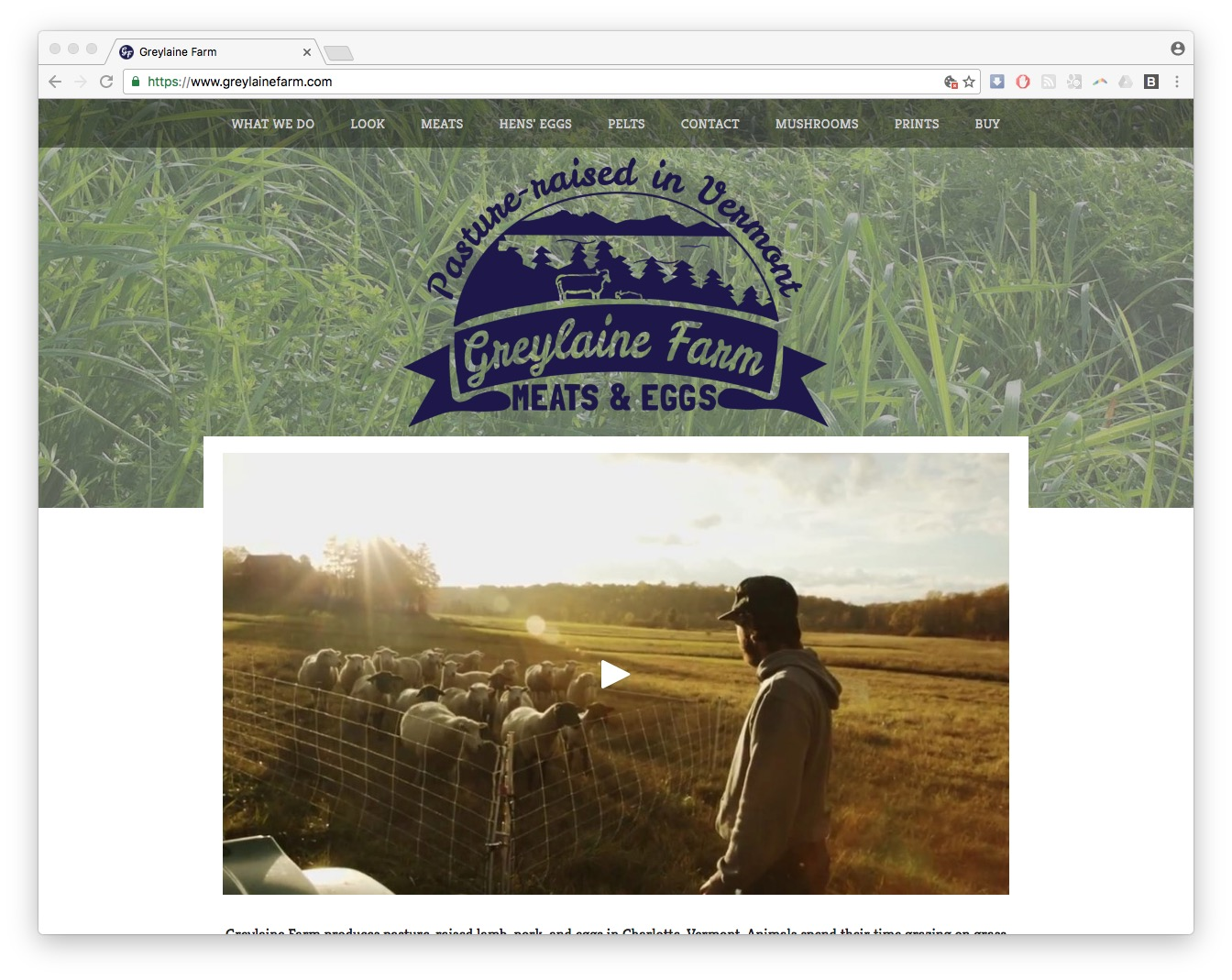 greylaine farm web design squarespace vermont homepage screenshot
