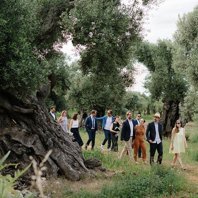 Most beautiful walk to the ceremony @masseriamoroseta . . . Planning @giusyweddings  #masseriamoroseta #apulia #puglia #destinationweddingitaly #apuliawedding #apuliaweddingphotographer #italianwedding #europewedding #masseriamorosetawedding #masseriawedding #masseria #ostuni #ostuniwedding