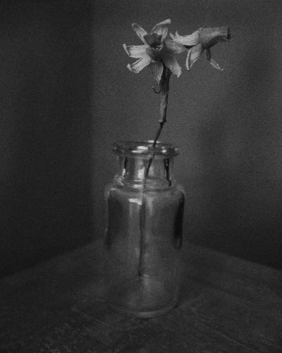 narcissus - photogravure