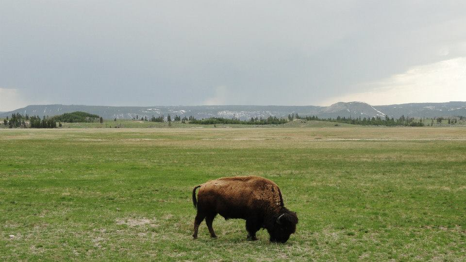 """MONTANA  In Yellowstone, Shayne discovers that """"Please Stay on the Trail"""" is more than just a suggestion."""