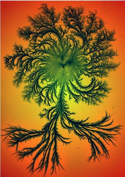 154_EBJ08_bacteria_colonies.jpg