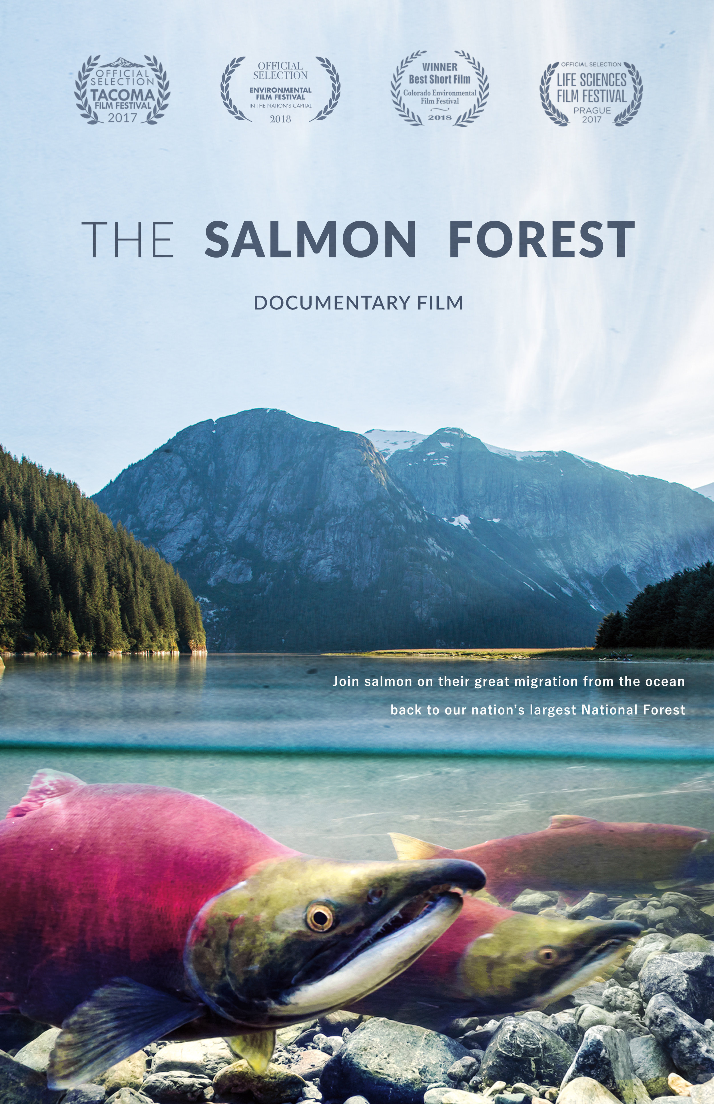 The Salmon Forest -