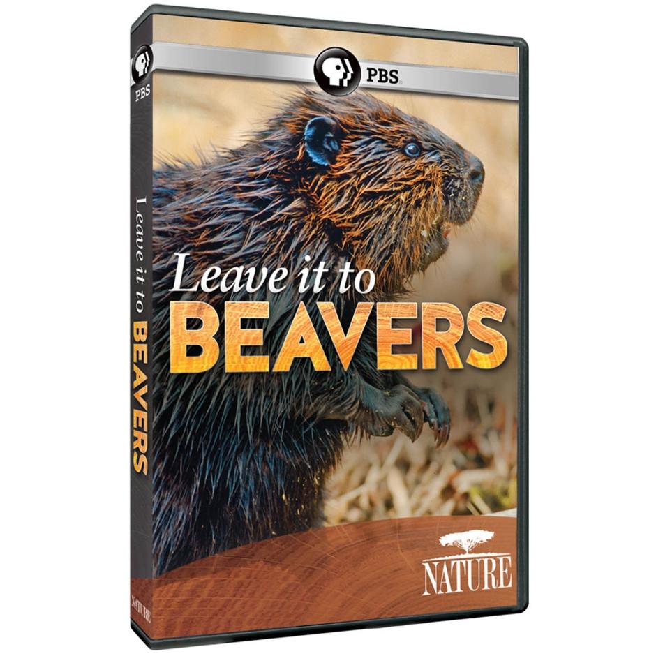 leave it to beavers.jpg