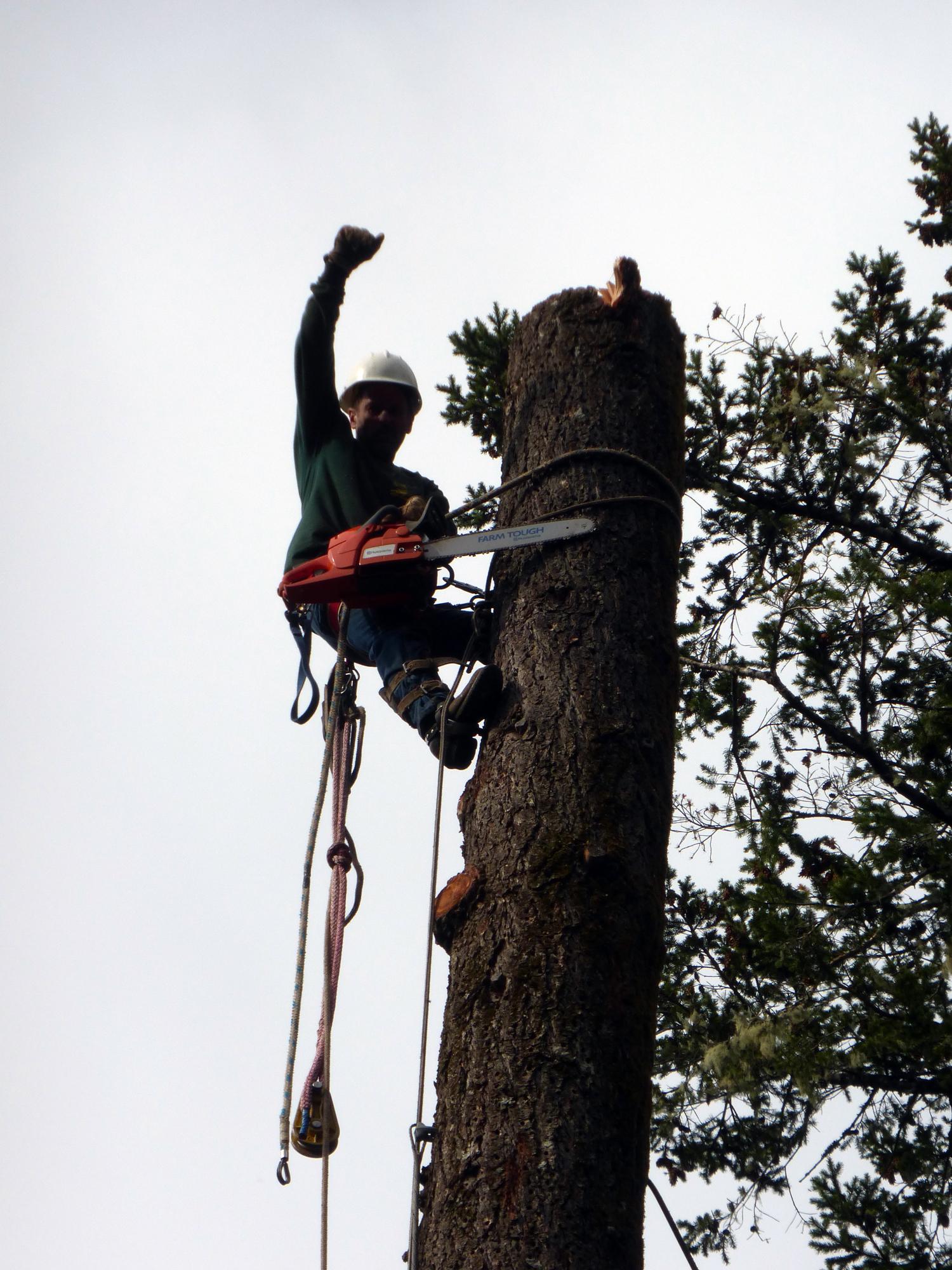 sonoma-tree-care-tree-removal.jpg