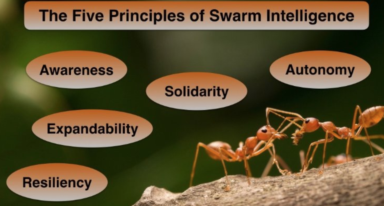 LinkedIn - September 20, 2016The Five Principles of Swarm Intelligence