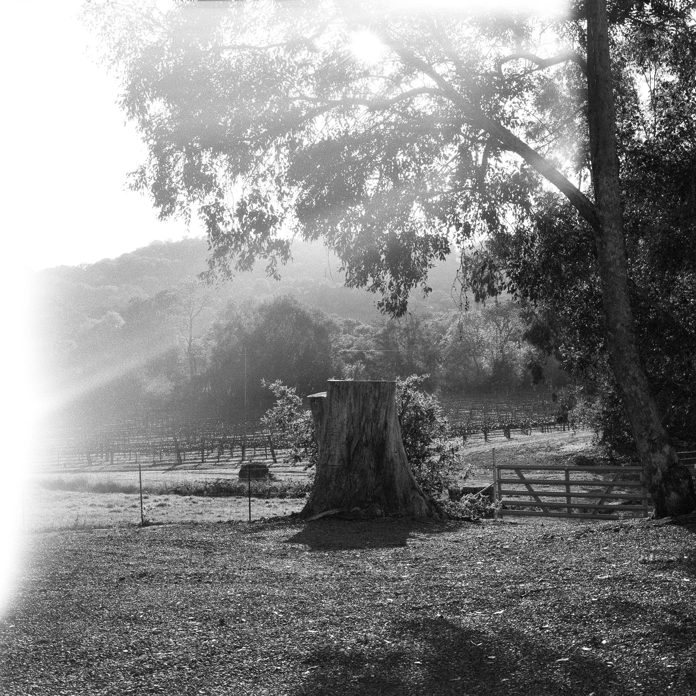 Aldo Carrera x Simon Ungless-3-crop.jpg