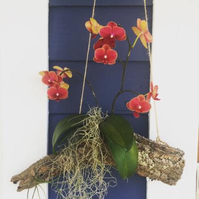epiphyte hanging garden