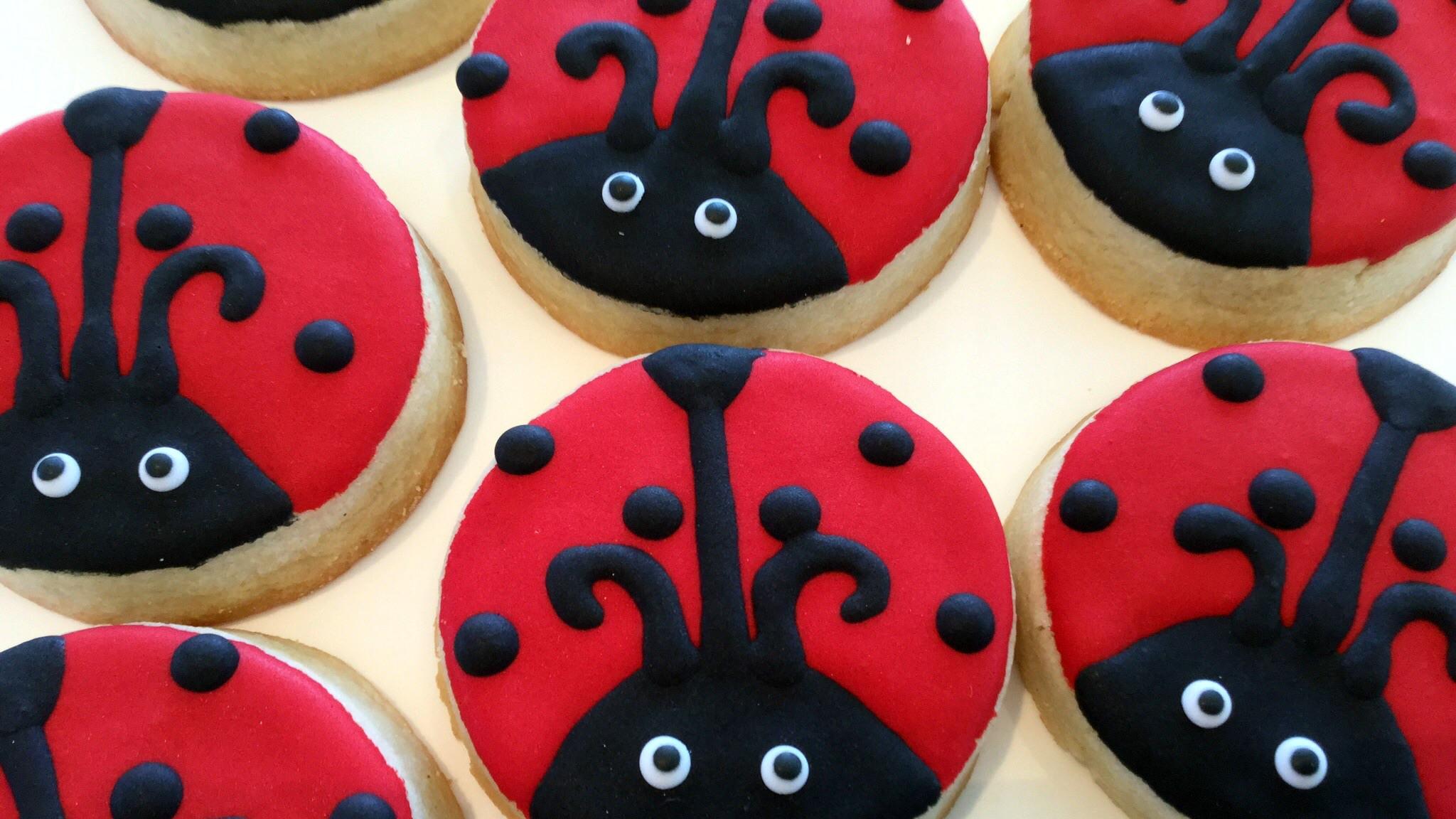 ladybugs-resized.jpg