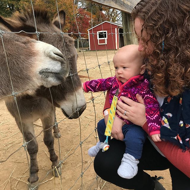 It was a big day meeting a mini donkey who happens to also be named Milo (plus the donkey's mom's name is Flower?!)