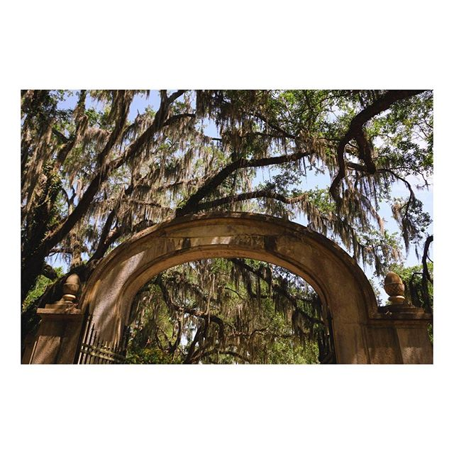 Such beautiful ancient trees. Wormsloe was a plantation built in 1739. The house is now in ruins, but the 1.5 mile oak avenue lives on.