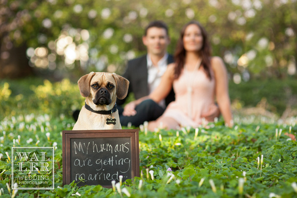 Dustin Waller Engagement Photos Dog Ring Barer