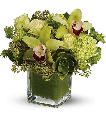 orchid-botanica