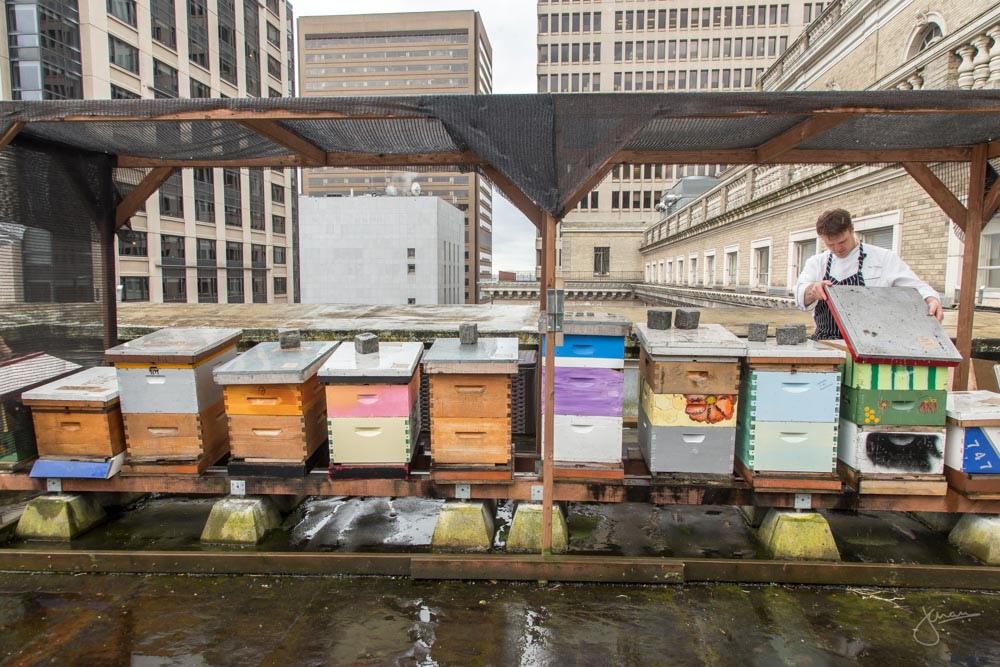 Rooftop Bee Hives