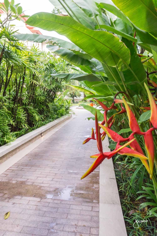 Walk through the Resort Grounds