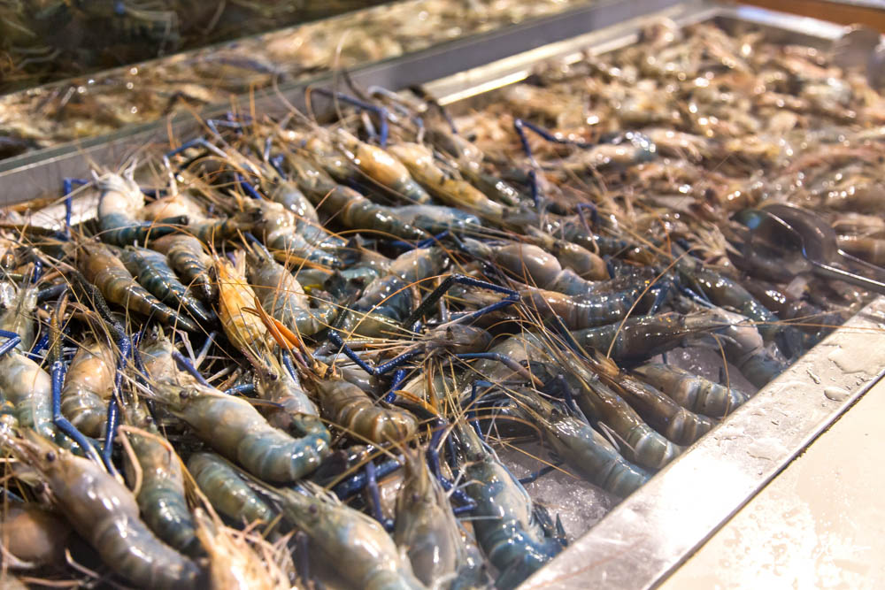 Fresh Seafood at Seafood Dinner Buffet