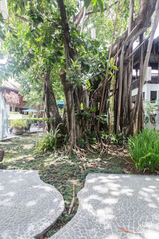 137 Pillars House, Chiang Mai Grounds