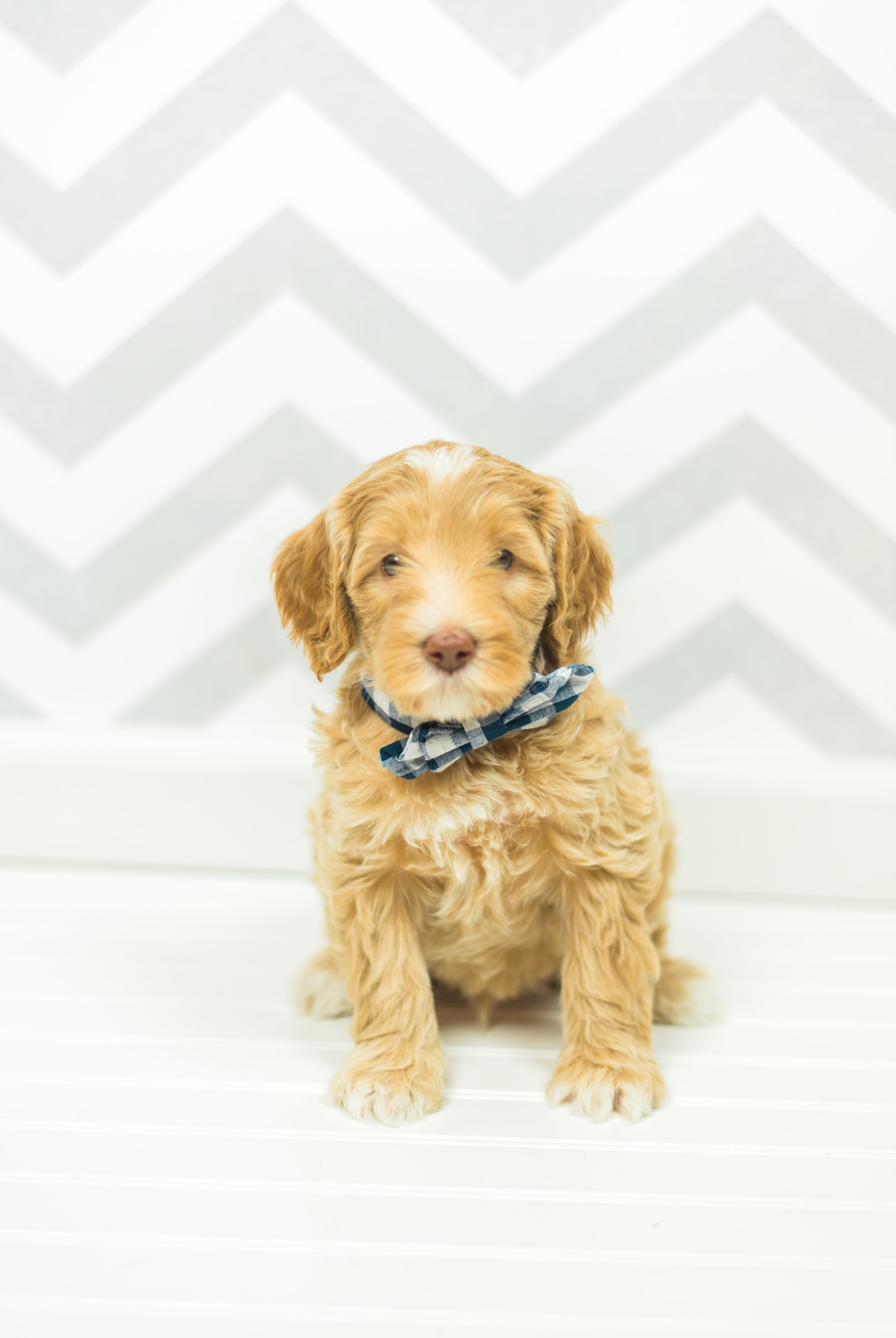 puppies-0006.jpg