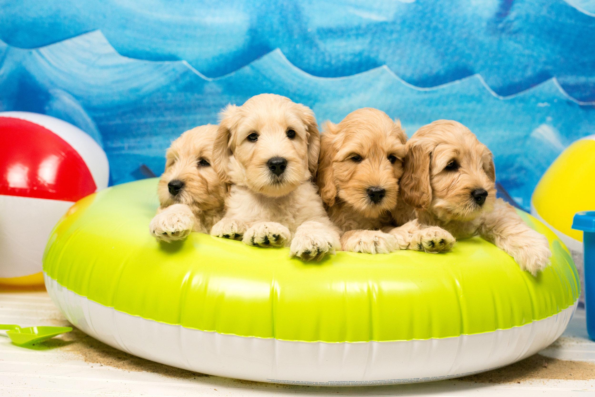 puppy 2-0013.jpg