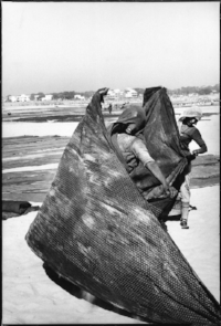 A photograph of ladies drying fabric in India by Henri Cartier=Bresson.