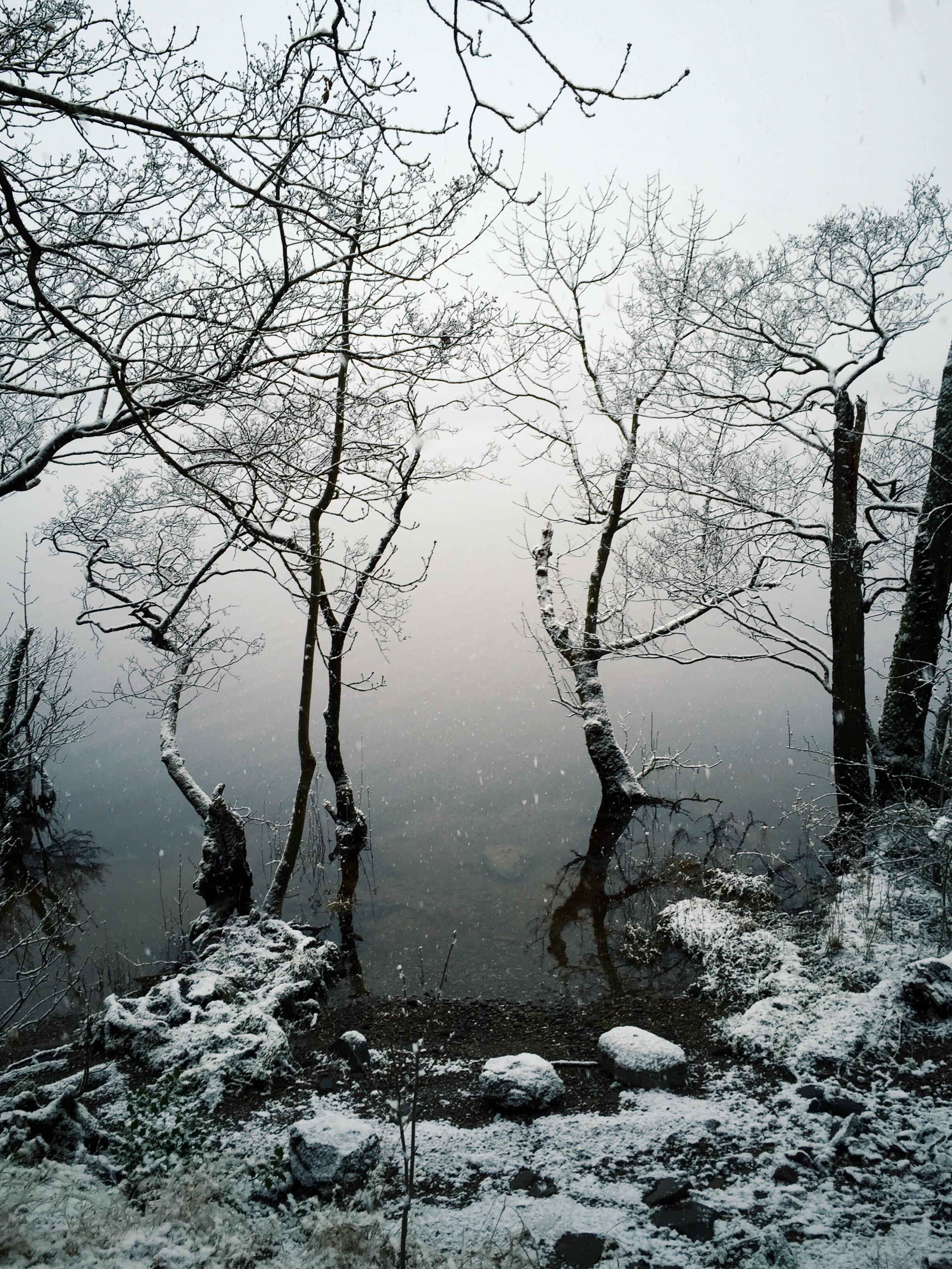 tree lake view 1 copy.jpg