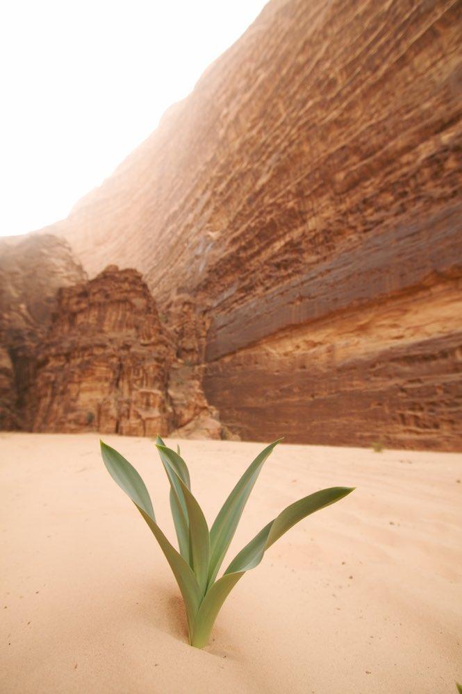 Life springs forth in the desert.jpg