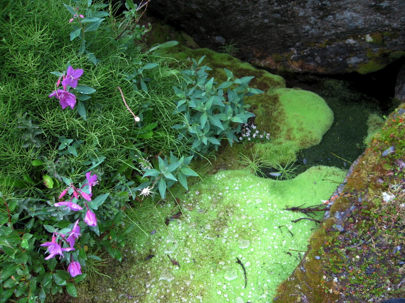There were some very vibrant green mosses growing around streams
