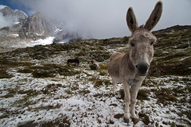 A friendly donkey during a hike around Chamonix