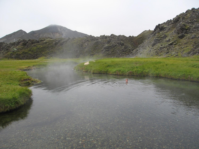 Gemma soaking in a natural hot spring at Landmannalaugar while sheep lounge nearby