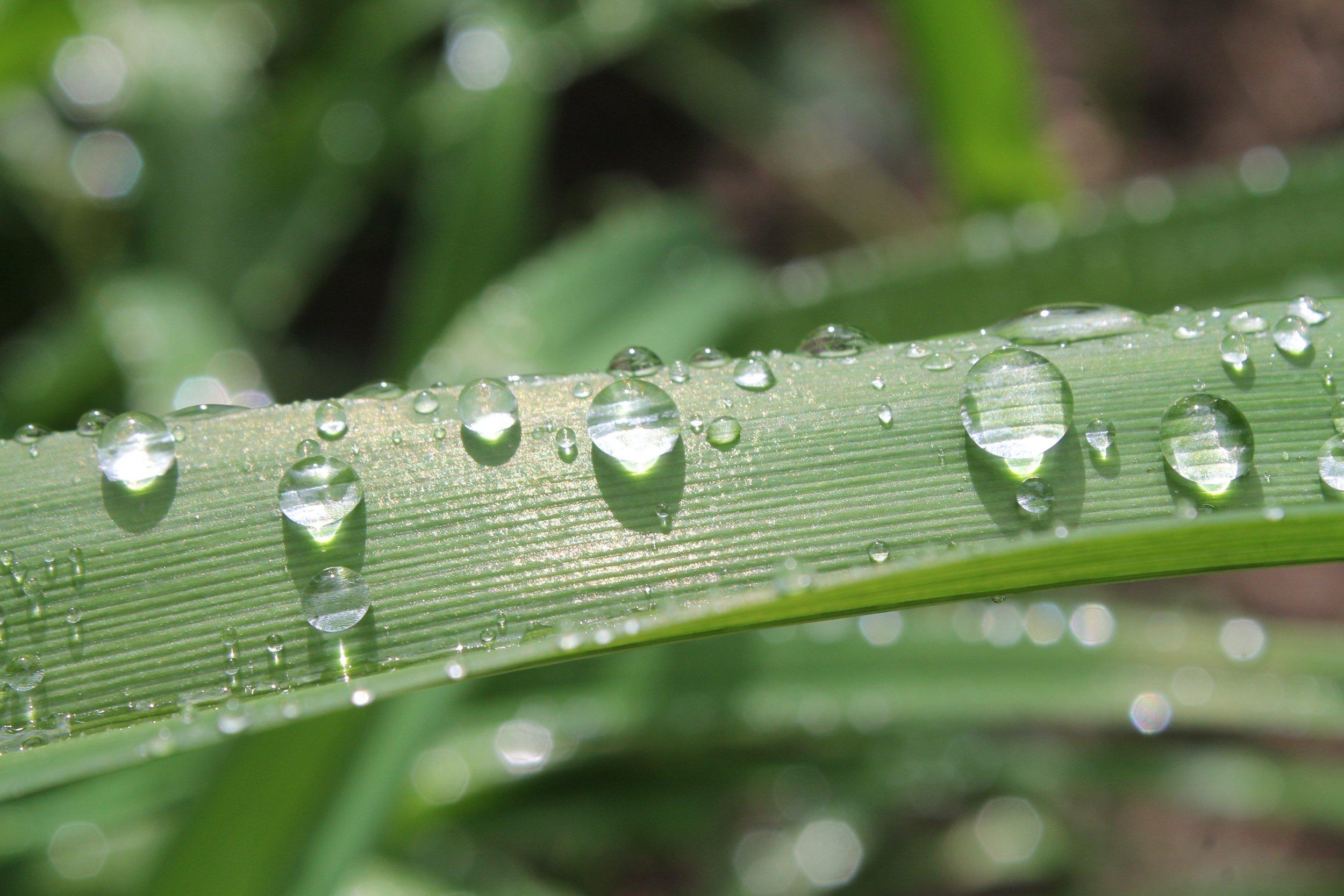 water-on-leaf.jpg