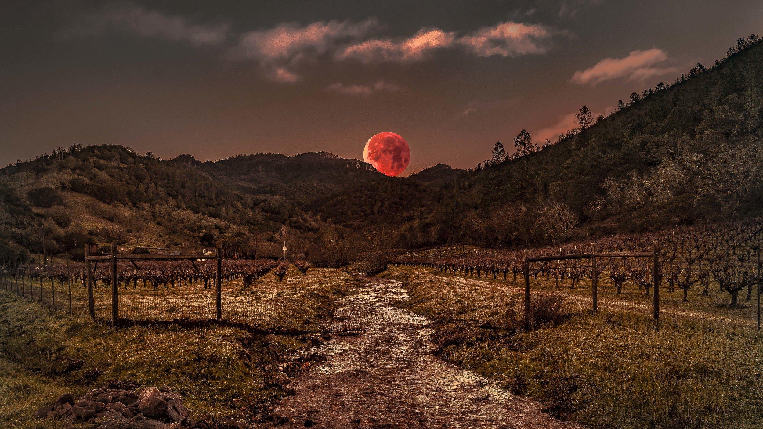 Newmenic_022_wolf moon 2.jpg