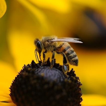 Las picaduras de abeja también poseen efectos benéficos.