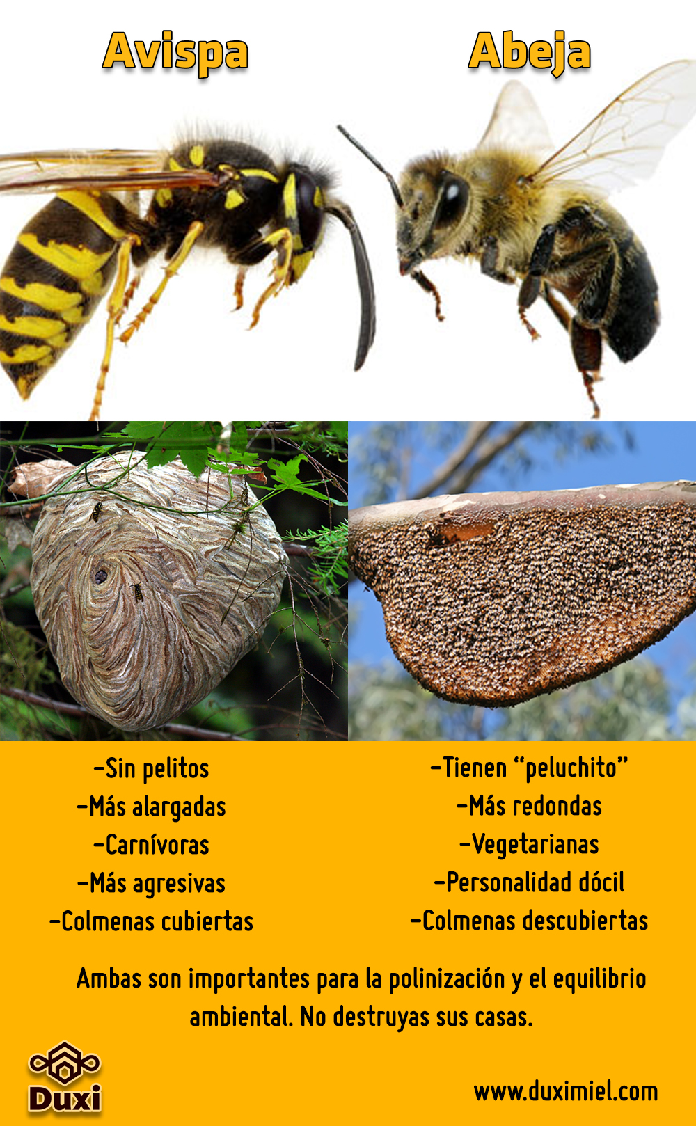 Puedes distinguir entre abejas y avispas por las características de sus cuerpos y sus nidos.