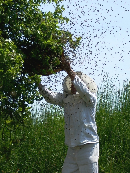 La manera más segura de deshacerte de una colmena es contratando a un apicultor profesional.