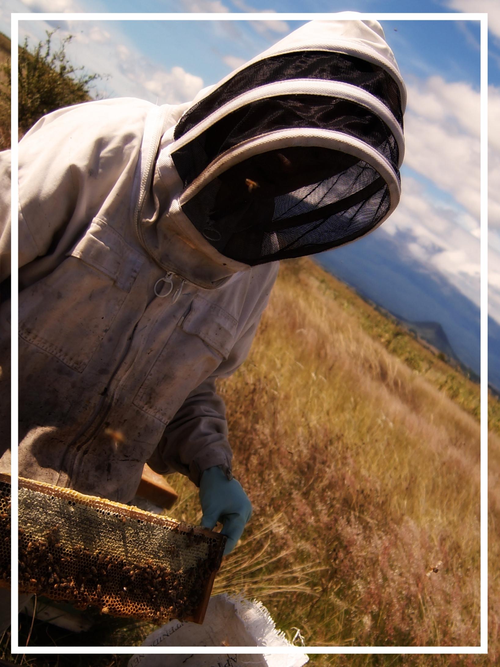 Maestro Apicultor - guías y materiales para apicultores