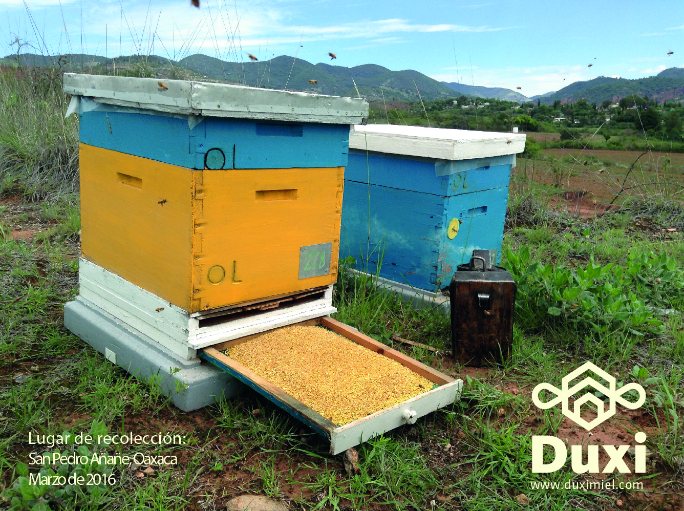 Colmenas Duxi en producción de polen.